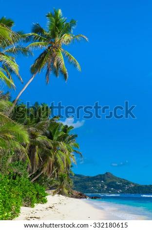 Tranquility Jungle Palms  - stock photo