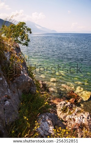 Transparent clear water and color rocks with flowers in lake Ohrid, Macedonia, Europe - stock photo