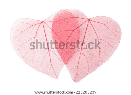 Transparent heart-shaped leaves - stock photo