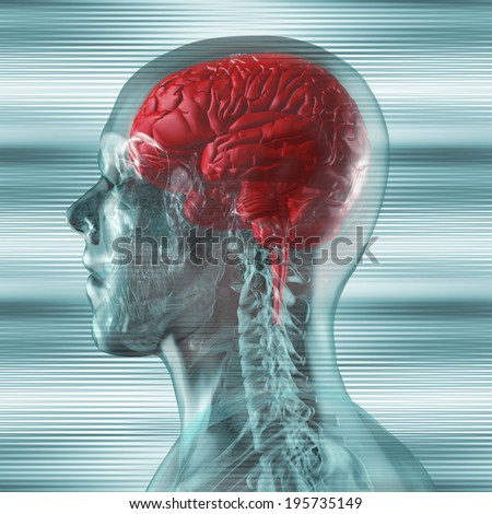 transparent human head with visible brain - stock photo