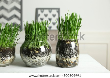 Transparent pots with fresh green grass on table - stock photo