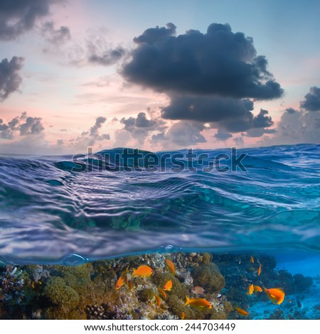 Transparent sea with sunset sky and underwater world discovered  - stock photo