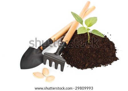 Transplant of a tree and garden tools on a white background. Concept for environment conservation.