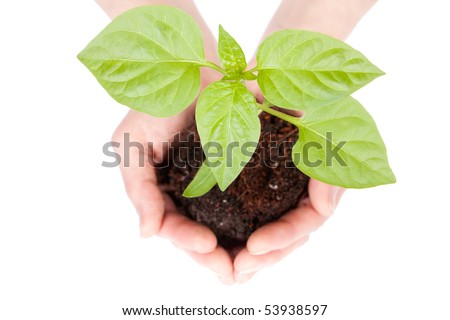 Transplant of a tree in hands on a white background. Concept for environment conservation. - stock photo