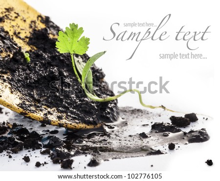 Transplanting plants and garden tools on a white background. The concept of environmental protection.  (with sample text) - stock photo