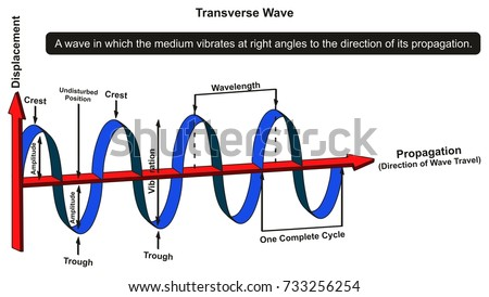 Transverse Wave Infographic Diagram Showing Structure Stock