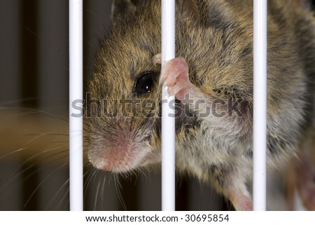 Trapped mouse in a cage