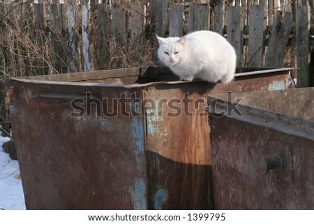 Trash cat - stock photo