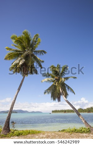 travel background with two coconut palms at a tropical beach, Praslin; Seychelles, Africa