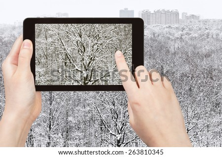 travel concept - tourist takes picture of snow-bound oak in forest after winter snowfall on smartphone, - stock photo