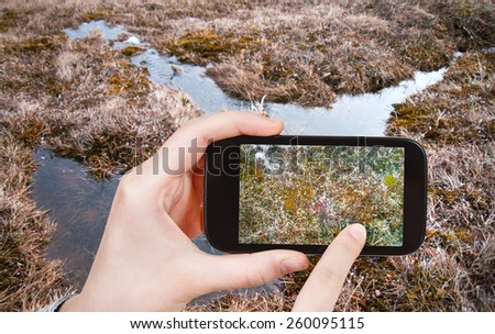 travel concept - tourist taking photo of swamp in Arctic tundra, Siberia, Chukotka on mobile gadget Russia - stock photo