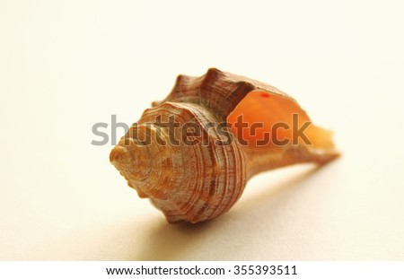 Travel concept with seashell - stock photo