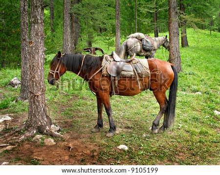 Travelers' horses, camping - stock photo