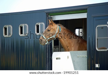 traveling horse sticking head out  trailer - stock photo