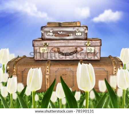 Traveling  suitcases in a tulip field with sunlight - stock photo
