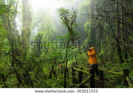 Traveller taking photo at Beautiful rain forest at ang ka nature trail in doi inthanon national park, Thailand - stock photo