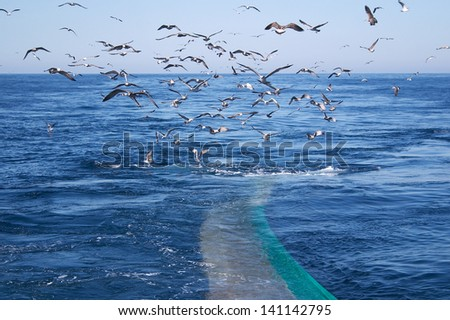 Trawl Fish Net Seagull Sea - stock photo