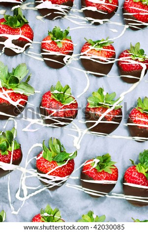 Tray of freshly dipped chocolate covered strawberries. - stock photo