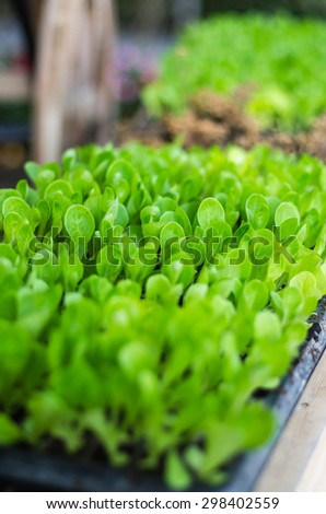 Trays of seedlings in greenhouse. - stock photo
