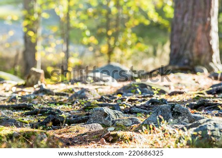 Trecking path with stones and trees at a low angle and short depth of field. - stock photo