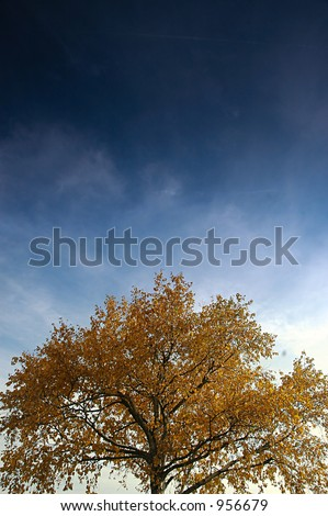 Tree - stock photo