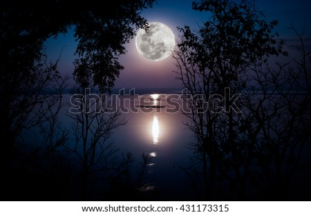 Tree against sky over tranquil lake. Silhouettes of woods and beautiful moonrise, bright full moon would make a nice picture. Beauty of nature use as background. Outdoors. - stock photo