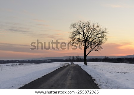 Tree along Road with Snow Covered Fields at Dusk - stock photo