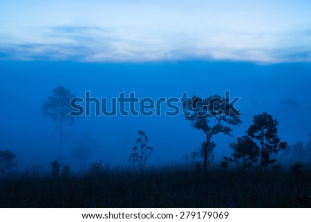 tree and blue nature - stock photo