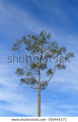 tree and blue sky,in Thailand