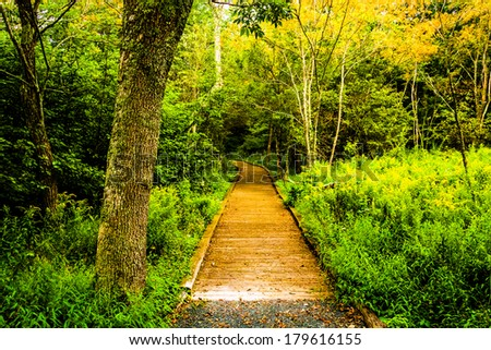 Tree and boardwalk path on the Limberlost Trail in Shenandoah National Park, Virginia. - stock photo