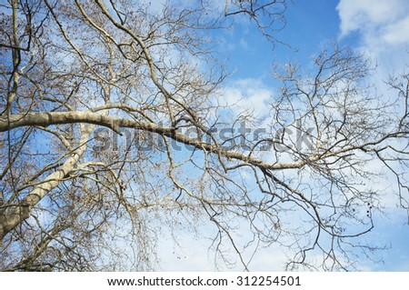 tree and branches on blue sky and clouds