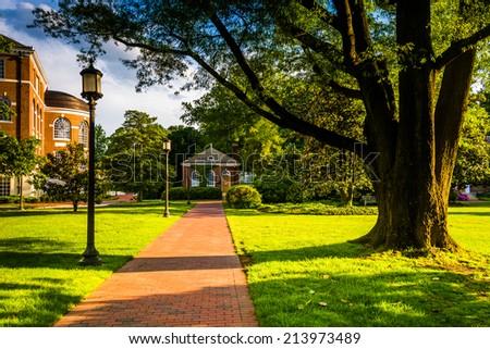 Tree and brick walkway at John Hopkins University in Baltimore, Maryland. - stock photo