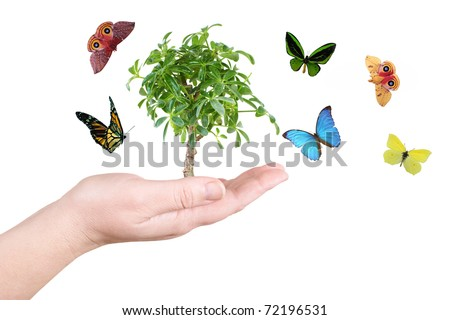 Tree and butterfly on a white background - stock photo