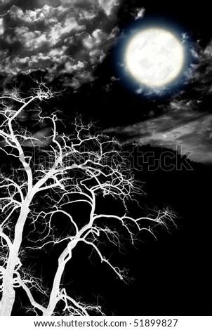 Tree and deep dark night. Nature composition. - stock photo
