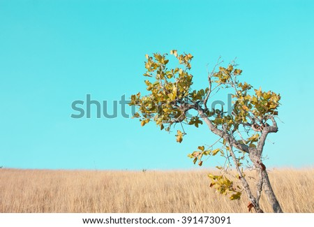 tree and dried grass field on vintage background - stock photo