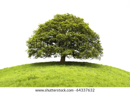 Tree and field isolated on white background - stock photo