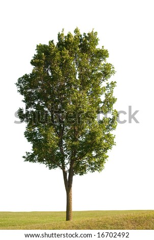 Tree and grass on a white background - stock photo