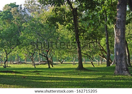 tree and grass with sun light scene in the garden of Chiang Mai University, Thailand - stock photo