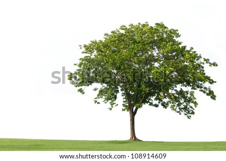 Tree and green grass isolated on the white backgrounds - stock photo