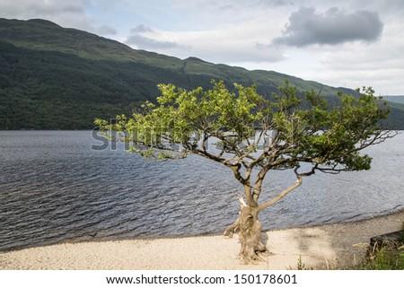 Tree and Loch Lomond in summer, Scotland - stock photo