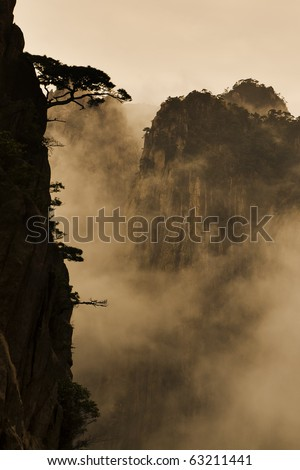 Tree and mountain in fog - stock photo