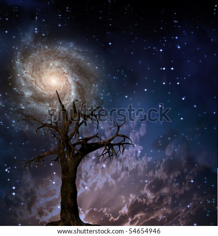 Tree and night sky with stars - stock photo