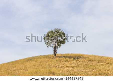 Tree and pasture in natural