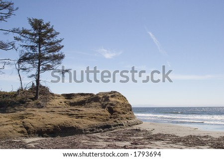 tree and rock on the Washington coast