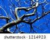tree and sky - stock photo
