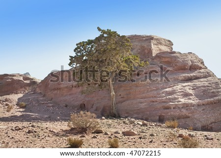 tree and stone in the desert of Jordan
