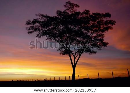 tree and sunset - stock photo