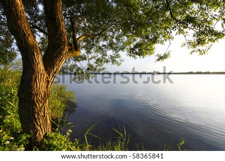 Tree and sunset lake