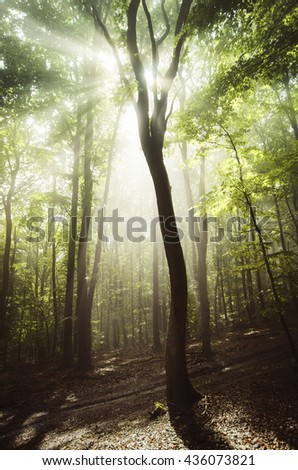 tree and sunshine in vivid summer forest - stock photo