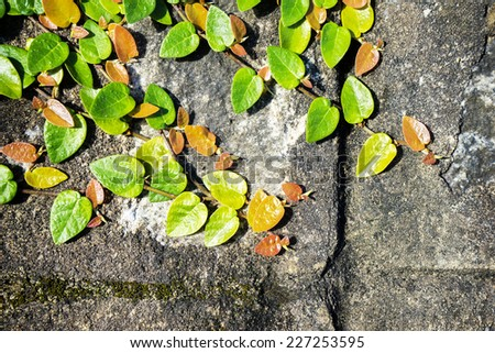 Tree and wall background ( abstract background) - stock photo